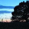 Sonnuntergang am Baum