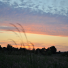 Weitere Gräser in der Abendsonne